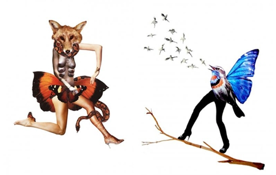 deborah kelly fox and bird